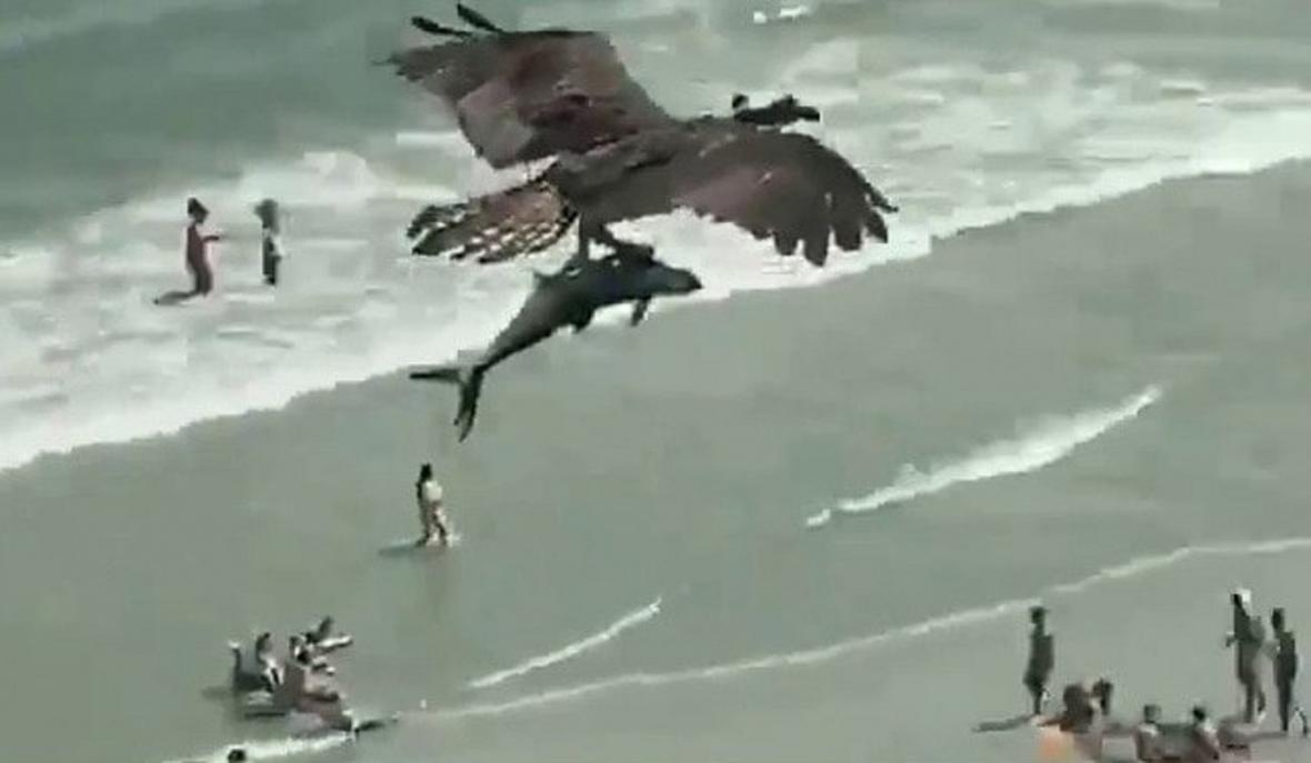 صحنه عجیب پرواز عقاب با کوسه در آسمان!