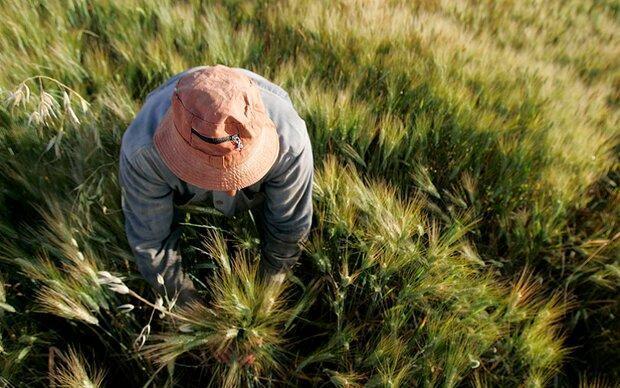 کود هوشمندی که از آلودگی خاک جلوگیری می کند
